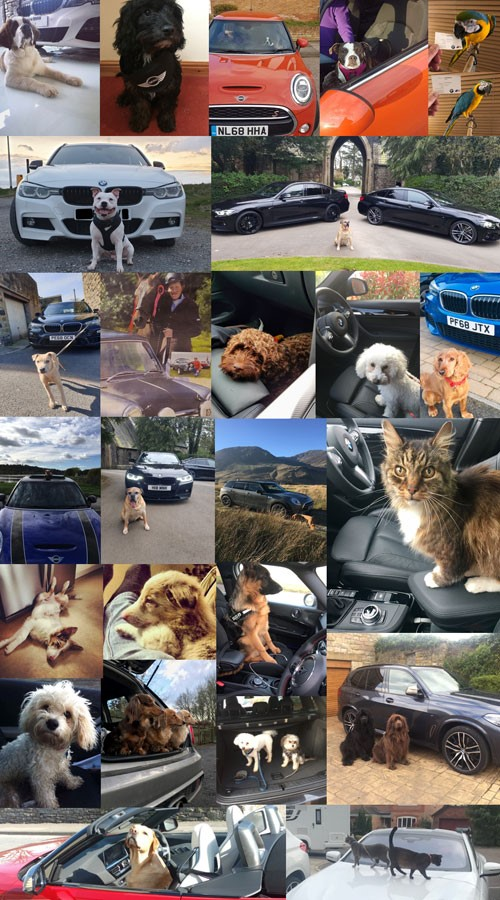 news-bmw-group-pet-photos-5